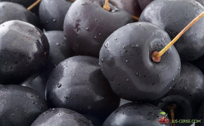Cerises noires pour jus de cerises